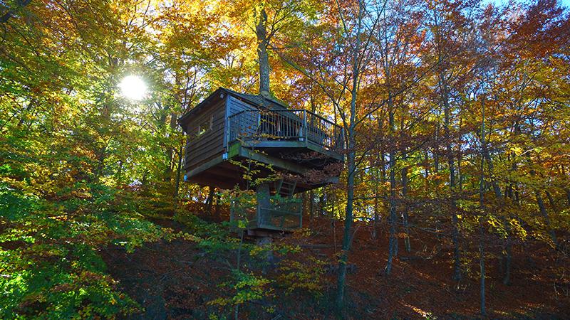 Baumhaus, Übernachtung in einem Baumhaus